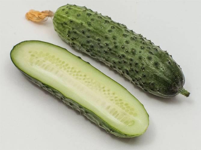 Богатый урожай вкусных и изящных плодов — огурец бакс f1: отзывы и описание сорта
