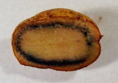 Почему вареная картошка синеет