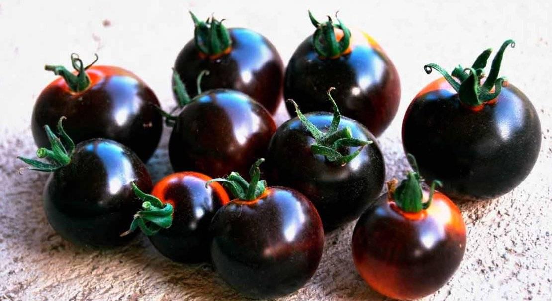 Насладитесь вкусными плодами томатов индиго роуз — описание сорта и особенности выращивания