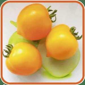 Сорт томата чудо рынка