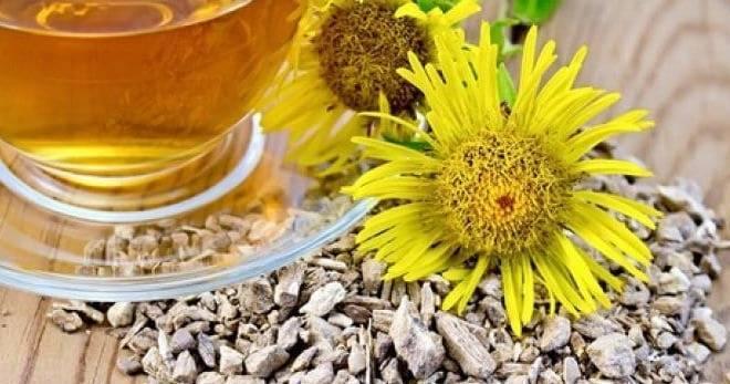 Корень подсолнуха: лечебные свойства и противопоказания, применение, рецепты
