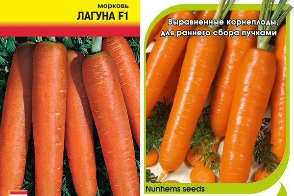 25 лучших сортов скороспелой моркови с описанием и характеристиками
