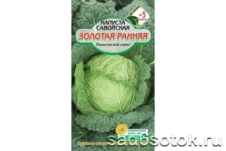 Савойская капуста – польза и вред - свойстава и калорийность, польза и вред на your-diet.ru | здоровое питание, снижение веса, эффективные диеты