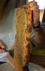 Обзор резаков для распечатки сотов и самостоятельное изготовление парового ножа. пасечные ножи: их применение и способы самостоятельного изготовления как  сделать  электронож  самостоятельно
