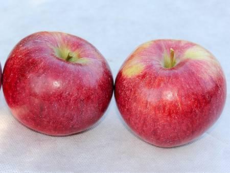 Яблоня коричное полосатое: описание сорта, фото, отзывы садоводов