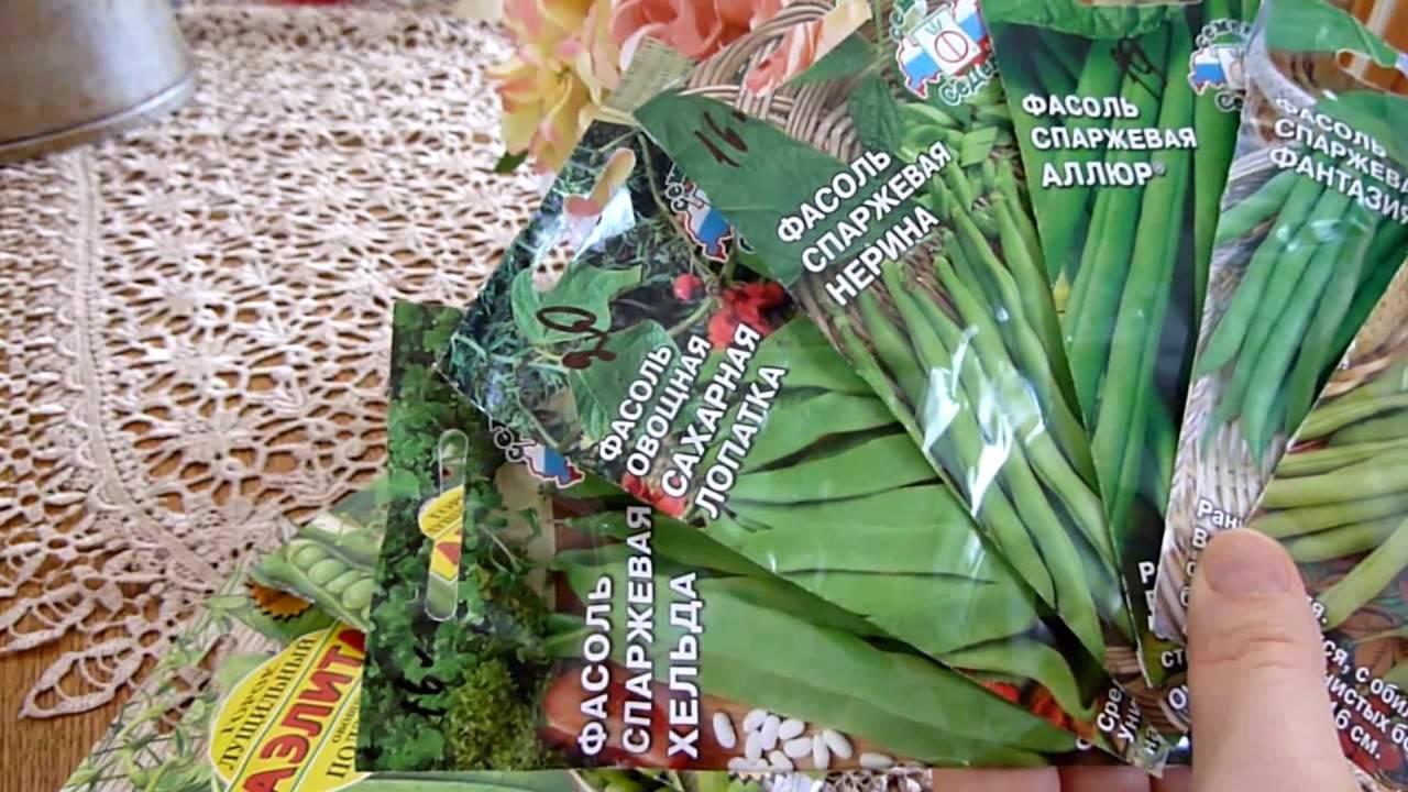 Фасоль спаржевая — выращивание и уход