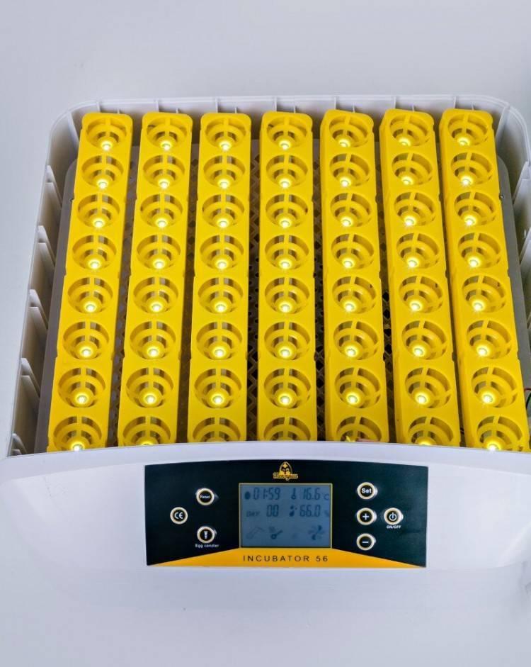 Инкубация перепелиных яиц: руководство для начинающих, режимы инкубации при выращивании в домашних условиях (125 фото)