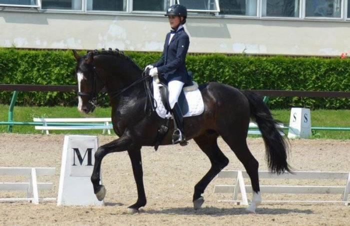 Голштинская лошадь — википедия переиздание // wiki 2