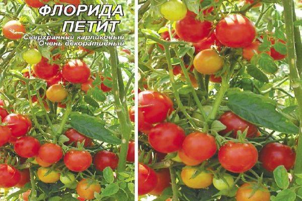 Сорт помидора «толстушка»: фото, видео, отзывы, описание, характеристика, урожайность