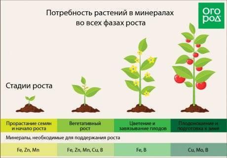 Что такое хелатная форма удобрений: польза и применение