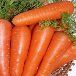 Самый крупный сорт моркови