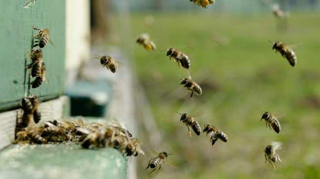 Зимовка пчел и подготовка к зимовке