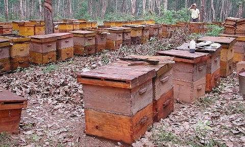 Зимовка пчел на воле: условия, способы, в южных и северных районах
