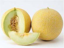 Особенности выращивания дыни в подмосковье в открытом грунте