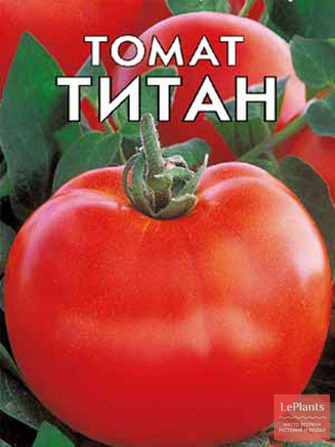 Детерминантный сорт томата «титан розовый»: описание, характеристика, посев на рассаду, подкормка, урожайность, фото, видео и самые распространенные болезни томатов