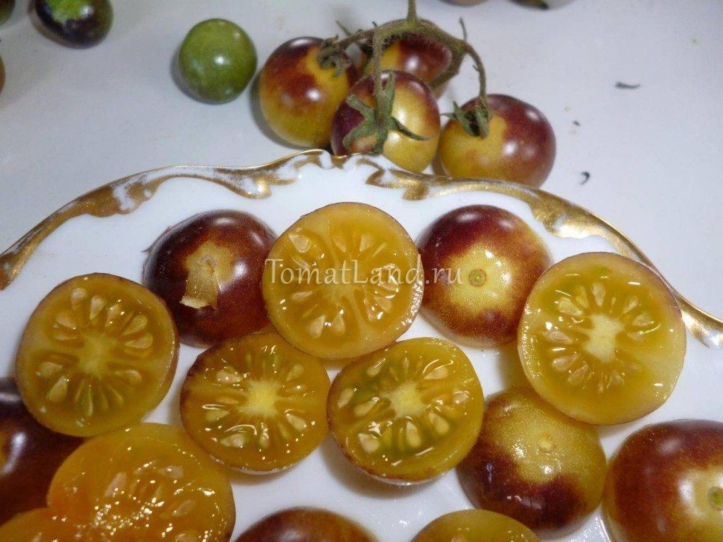 Особенности посадки и выращивания вишни тургеневка