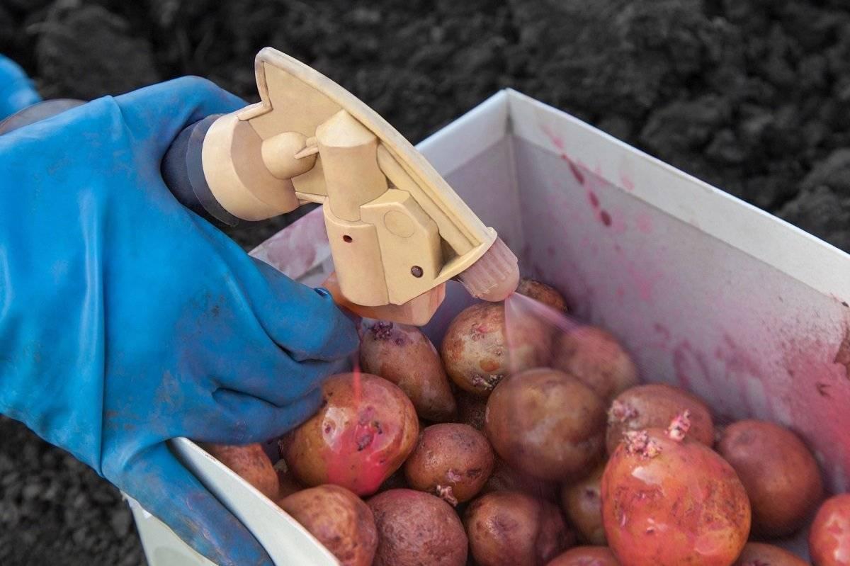 Командор плюс для обработки картофеля перед посадкой: отзывы