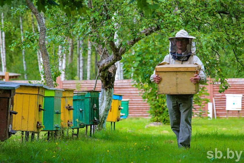 Улей колода: как сделать колоду для пчел своими руками