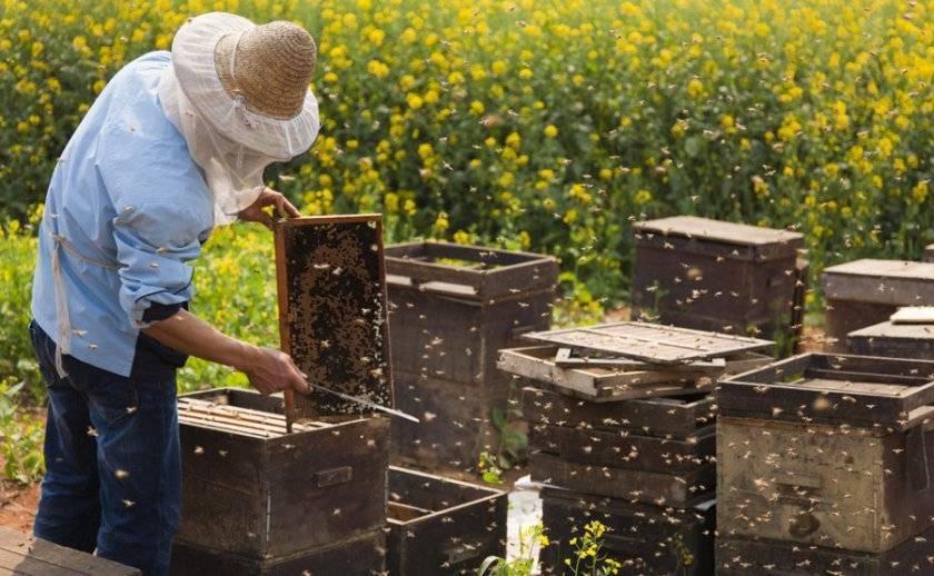 Что такое отводки пчел и как их делать?