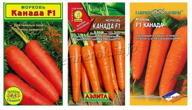 Сорт моркови санькина любовь: характеристика и особенности выращивания