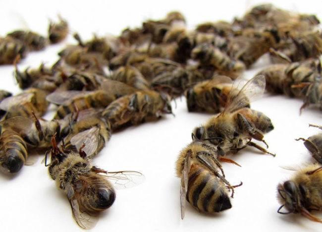 Рецепты с пчелиным подмором для лечения суставов: артрита, артроза, травм