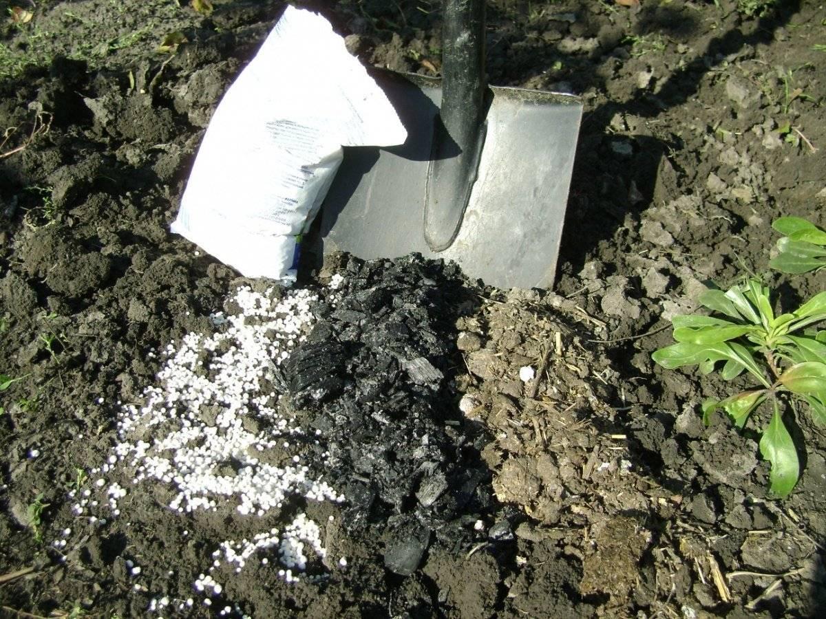 Нитрофоска удобрение: применение для томатов, виды составов