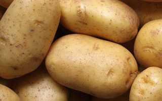 Картофель барин описание сорта фото отзывы
