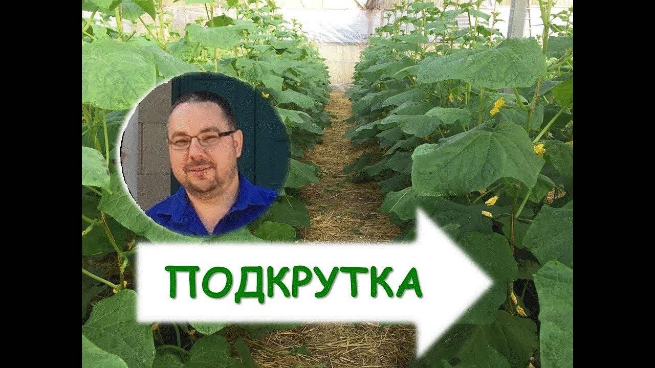 Сроки посева семян огурцов на рассаду для выращивания в теплице в разных регионах