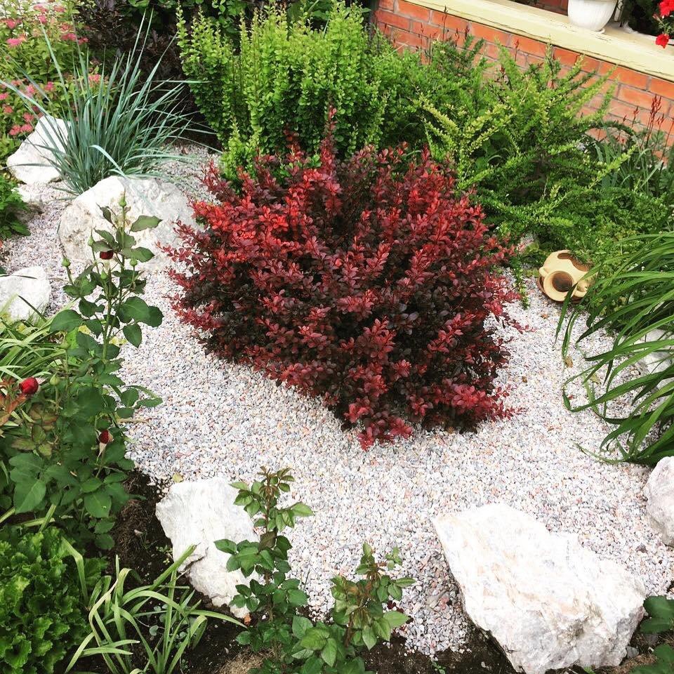 Яркое великолепие кустов барбариса в саду: многообразие видов и сортов