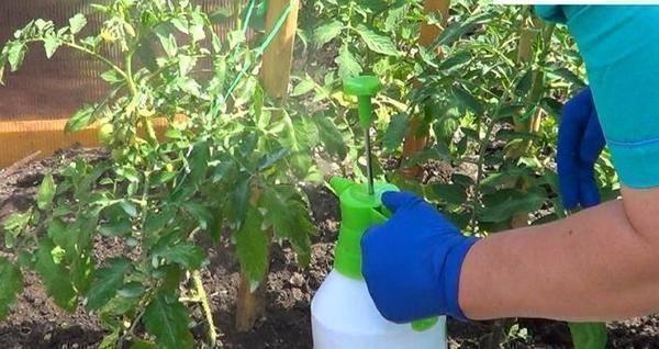 Как приготовить раствор борной кислоты для завязи помидоров: пропорции и инструкция по обработке томатов