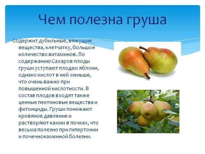 Полезные свойства груши: противопоказания, польза и вред
