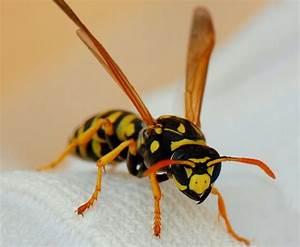 Укус пчелы вред или польза