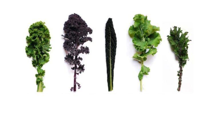 Капуста кейл — что это за овощ и как выращивать