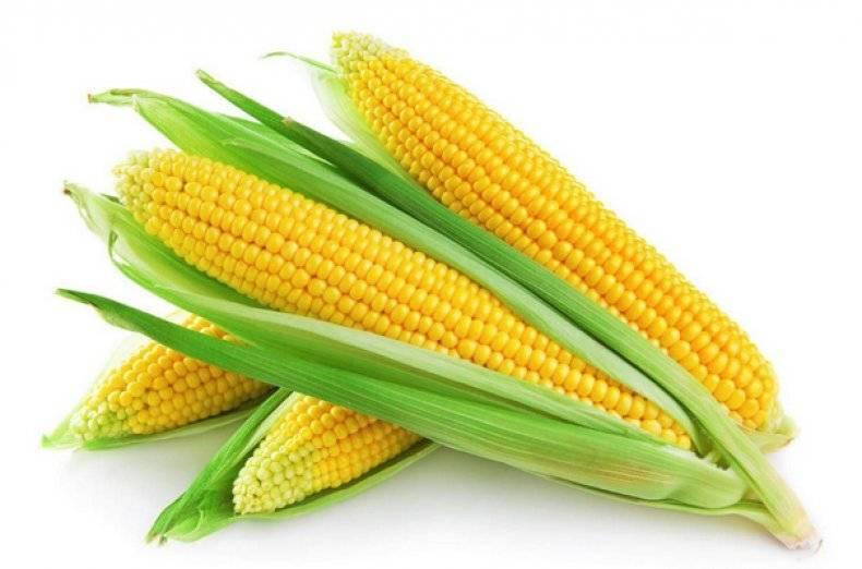 Кукуруза — польза и вред для здоровья, свойства и противопоказания