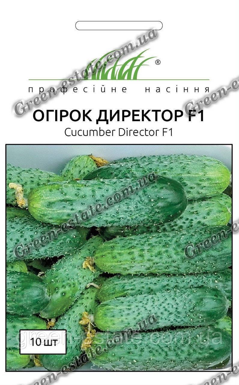 Огурец директор – 8 особенностей и 12 советов по посадке и выращиванию