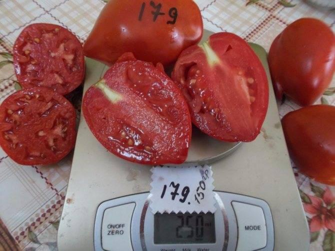 Сорт помидоров «ракета»: характеристика, достоинства и недостатки