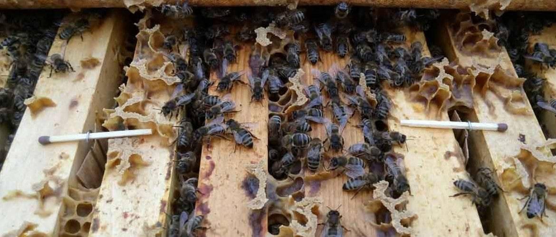 Обработка пчел от клеща