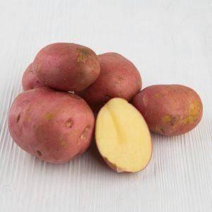 Картофель манифест: описание и характеристика, отзывы