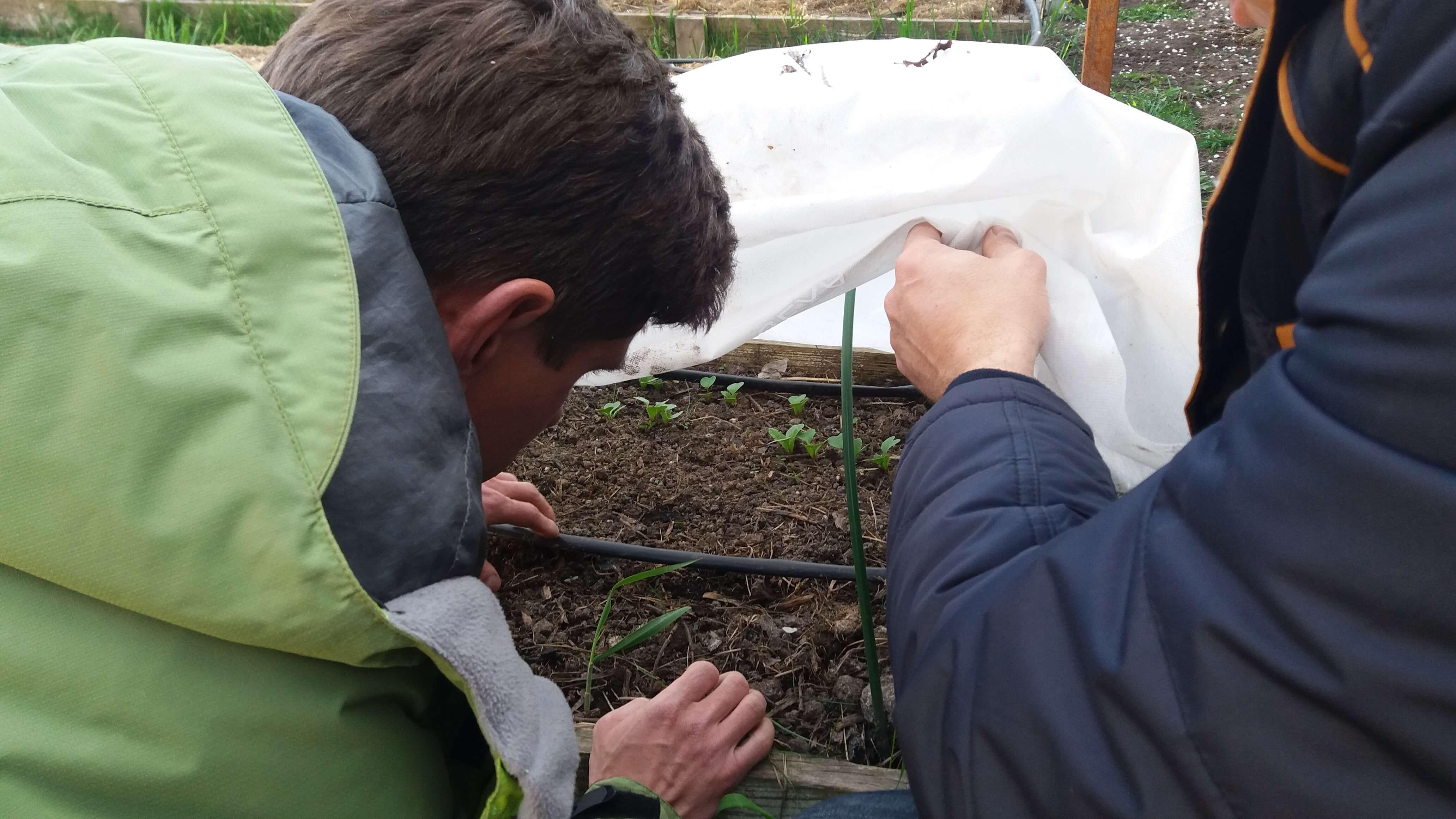 Гуматы — удобрения в сельском хозяйстве