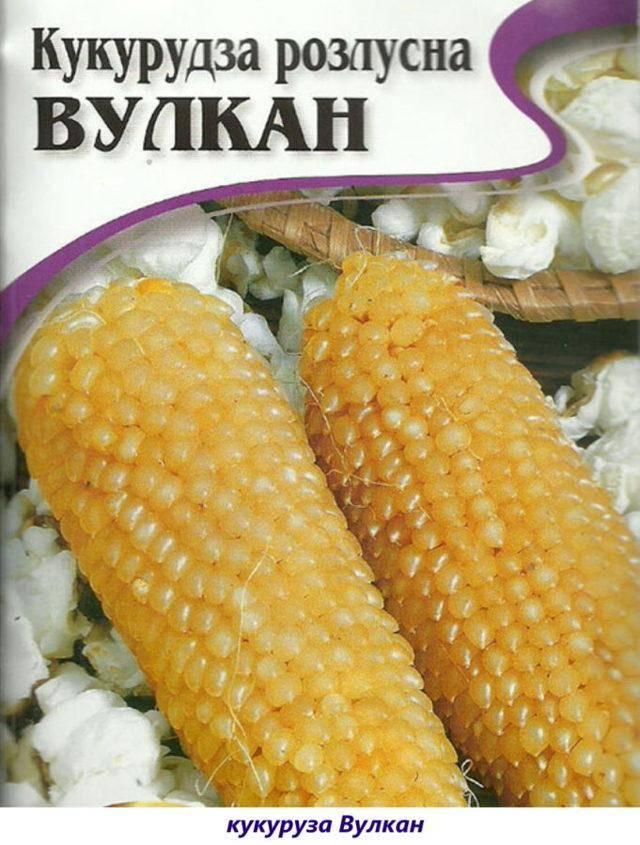 Кормовая (фуражная) кукуруза