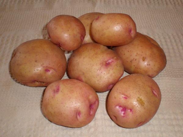 Картофель «жуковский ранний»: описание, характеристика сорта, отзывы