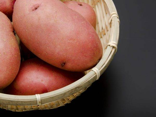 Неприхотливый сорт картофеля — лабадия. описание, фото и советы по выращиванию