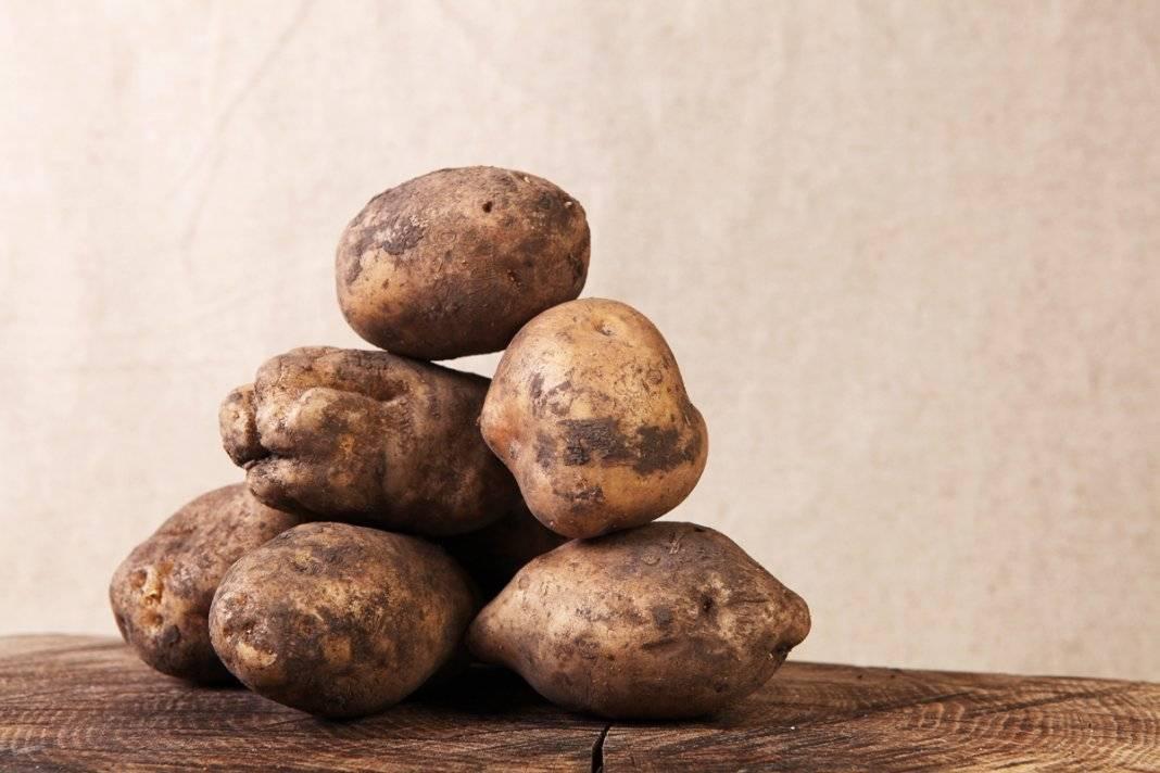 Особенности выращивания раннеспелого сорта картофеля барон
