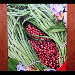 Фасоль спаржевая нота — описание сорта, фото, отзывы, посадка и уход
