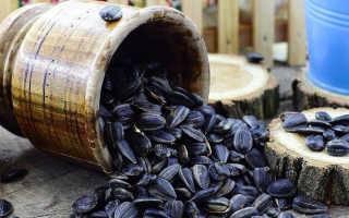 Семена подсолнечника: польза и вред для здоровья человека