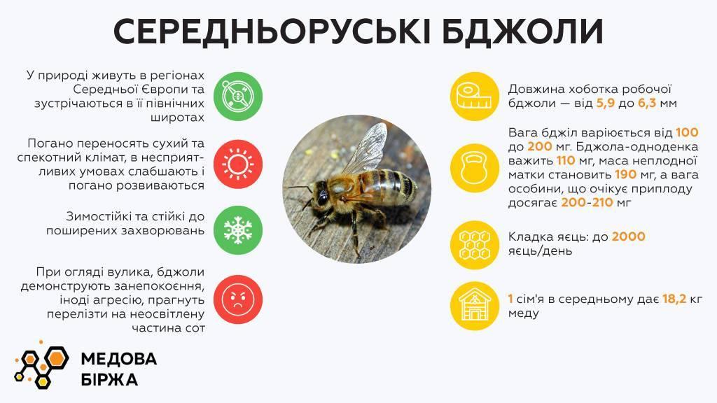 Болезни пчел их лечение