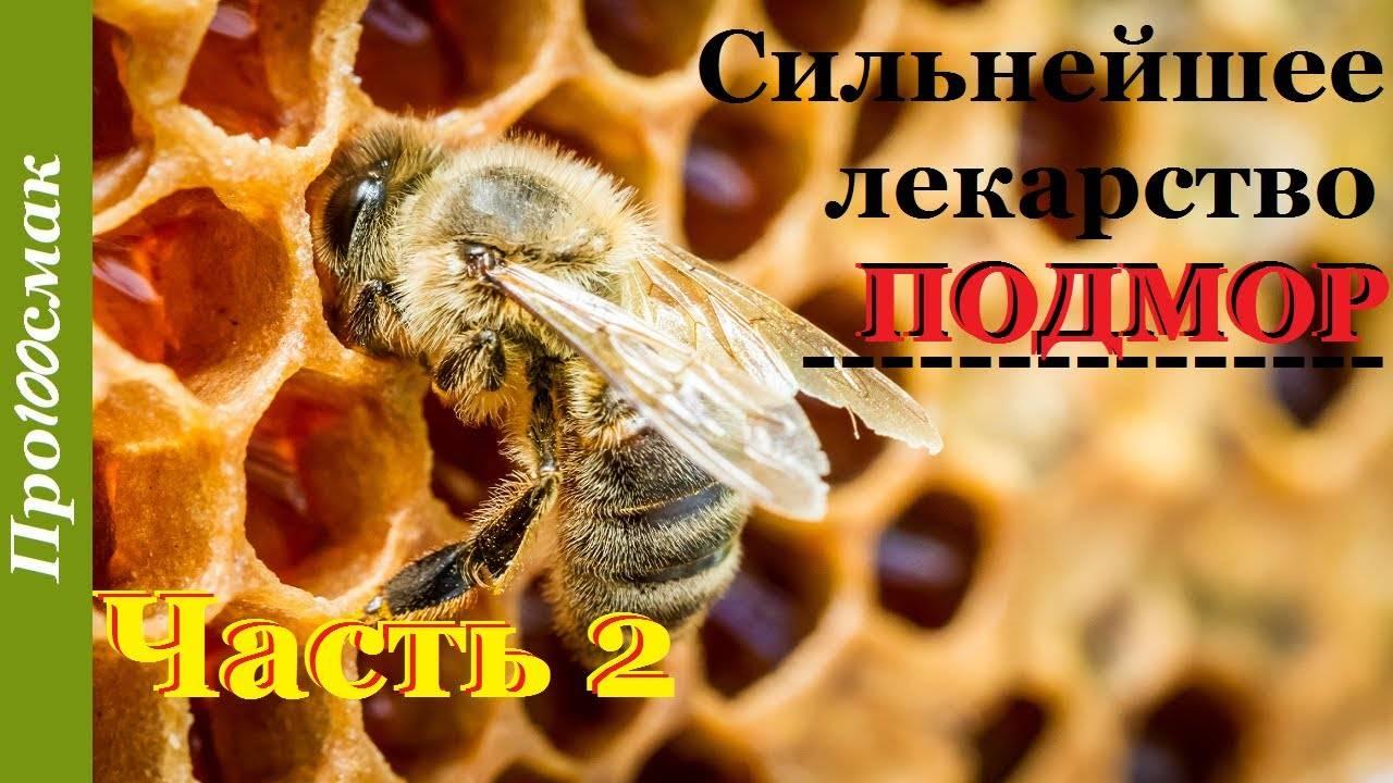 Рецепты для лечения суставов с помощью пчелиного подмора