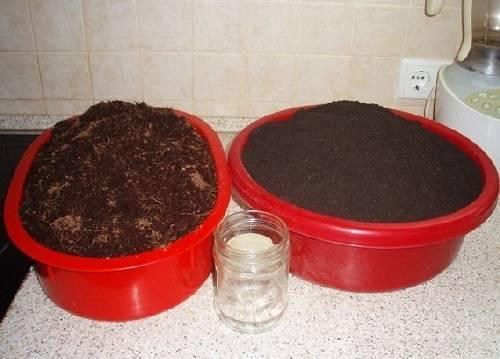 Когда сажать базилик на рассаду: сроки и особенности выращивания