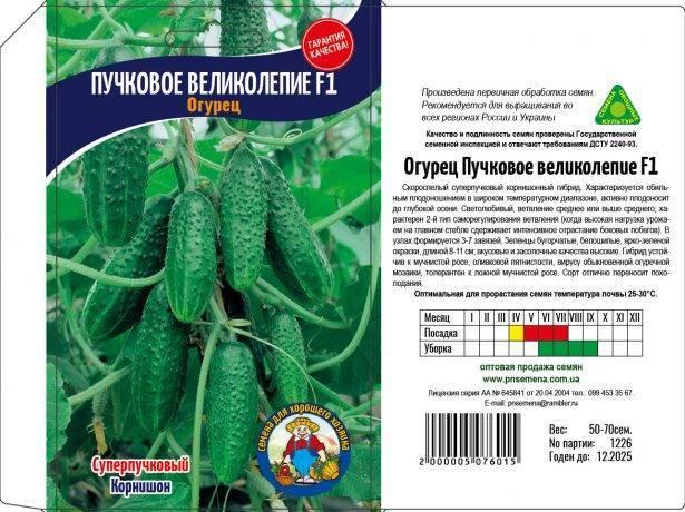 Особенности сорта огурцов «пучковое великолепие f1» и рекомендации по выращиванию