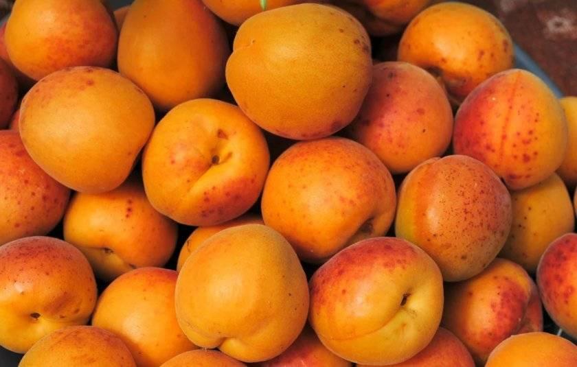 Особенности и характеристика сорта абрикоса краснощёкий